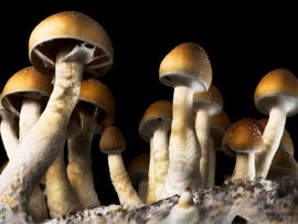 magic mushrooms, psychedelic mushrooms
