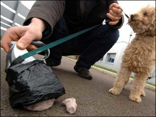 Woman Hits Driver In Face with Dog Poop, Because She Believed He Was Speeding