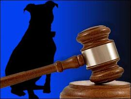 Man Accused of Castrating Dog Without Permission