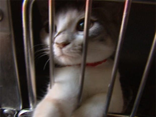 Women Had 77 Cats Living In 2 Cars