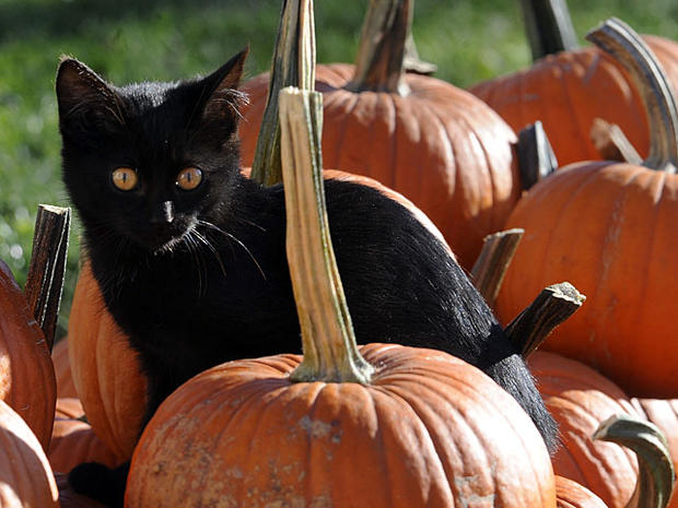 001-black-cat.jpg