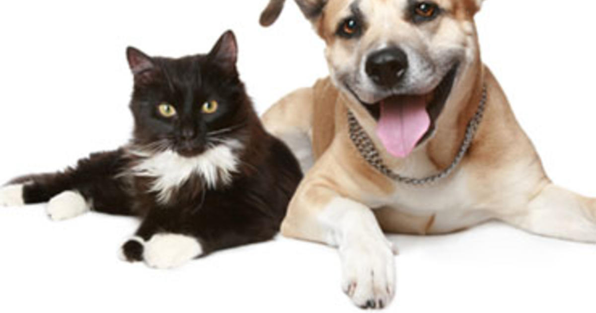 Which Species Is Smarter Cats Or Dogs