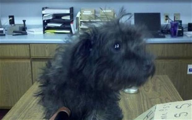 Woman Tried to Mail Puppy, Now She Wants the Dog Back