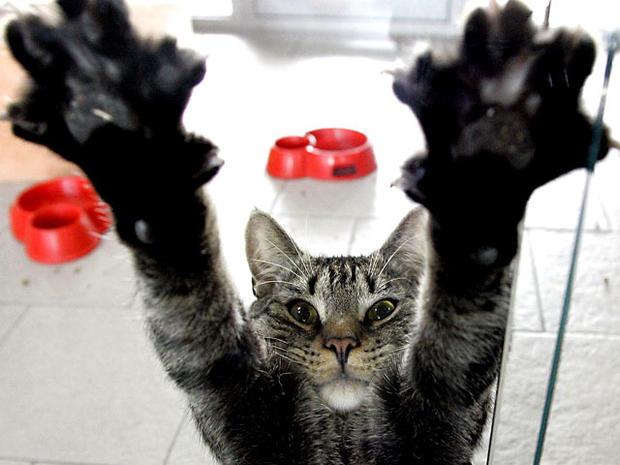 cat_scratch_973834.jpg