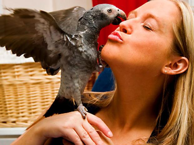 parrot_iStock_000003238603XSmall.jpg