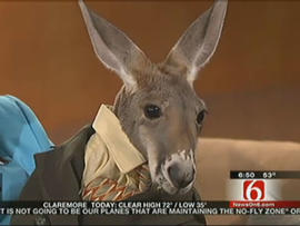 disabled kangaroo