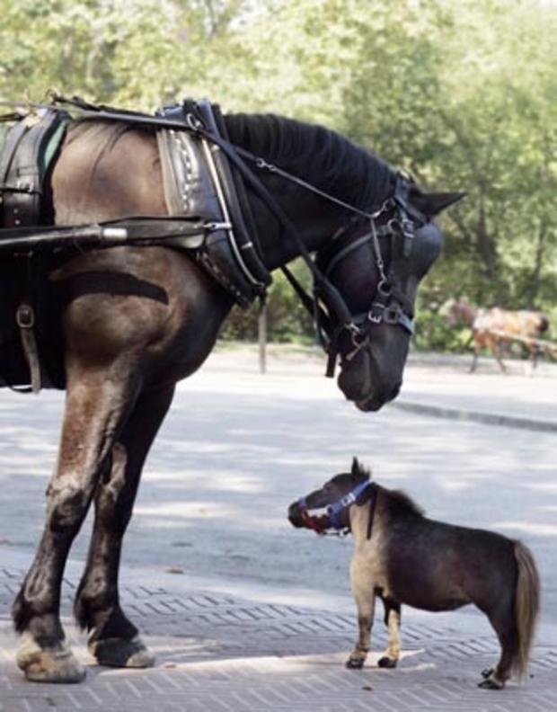 thumbelina-bighorse2.jpg