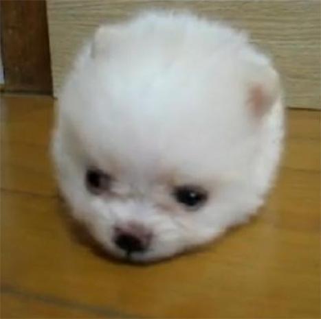 Itty Bitty Pets