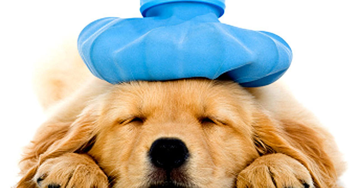 List Of Foods You Should Never Give Your Dog