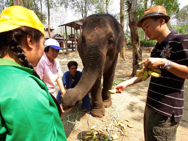 elephant-therapy2-AP110421058147.jpg