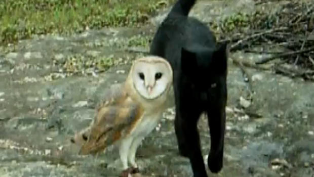 Cat Playing With Owl Youtube