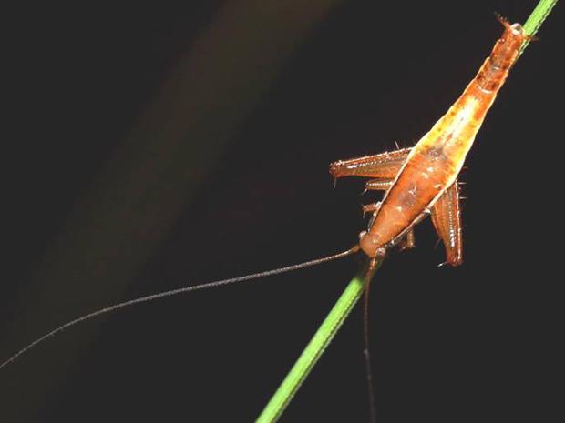 The top ten new species of 2010