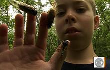 Cicadas: the familiar sound of summer