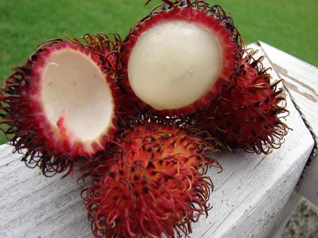 Rambutan_Wikimedia_Forest_and_Kim_Starr.jpg