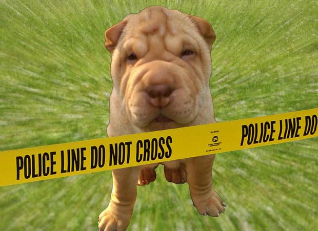 Dog DNA to nab poop-scoop scofflaws