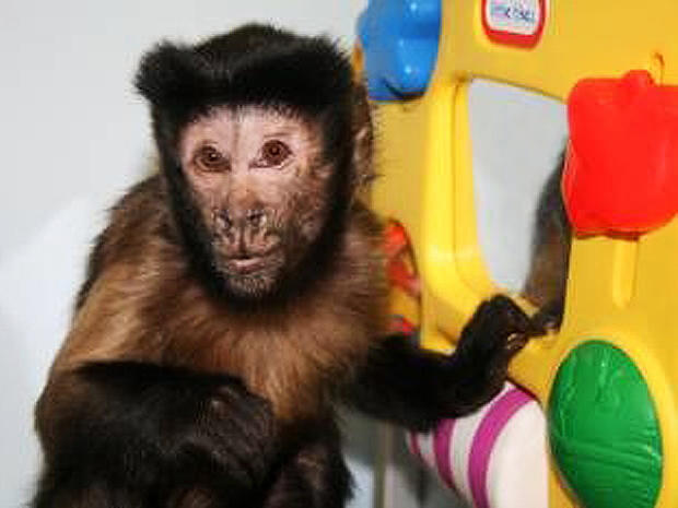 Monkeys lend helping hand to disabled