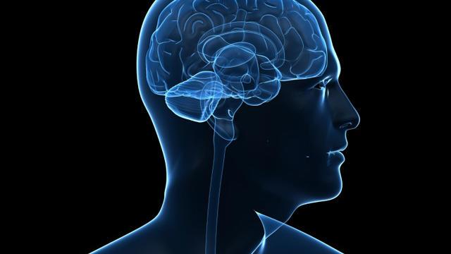 human_brain_iStock_000011222766Small.jpg