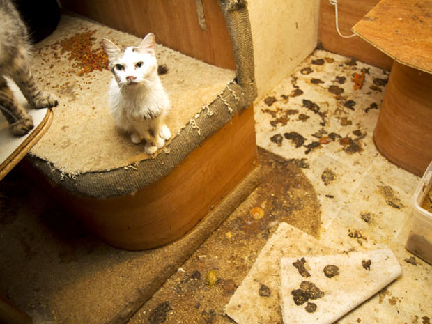 Pet hoarding horrors: 27 photos spotlight cruel disorder