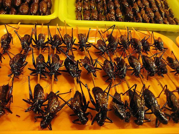 cricketsonastick.jpg