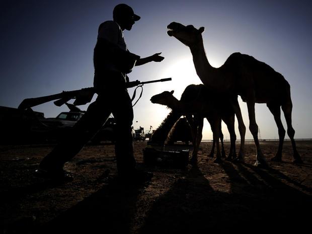 A Libyan rebel walks toward a camel at an advanced position near Al-Sadaadi on the road between Misrata and Sirte Aug. 31, 2011.