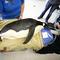 Penguin_117595098.jpg