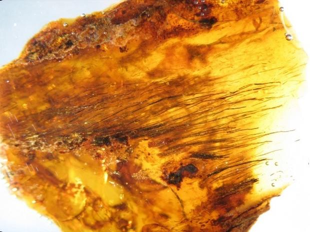 In living color: Ancient feathers preserved in amber