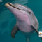 es_0922_DOLPHIN_01.png