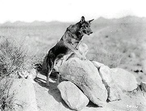 Desert Star Dog Doors Rin Tin Tin Photo 19 Pictures Cbs