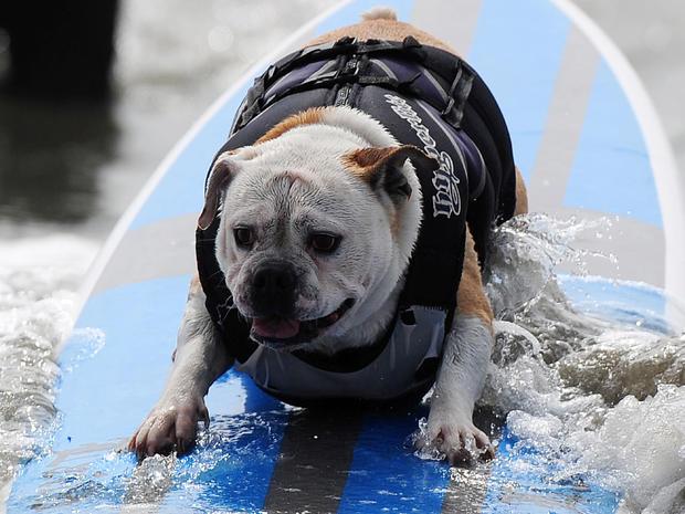 dog_surfing_3.jpg
