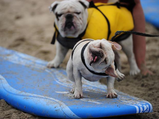 dog_surfing_8.jpg