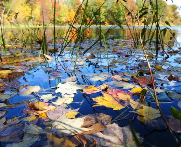 Fall_Foliage_AP110929122650.jpg