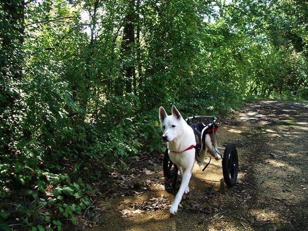 Duke-trailwalking.jpg