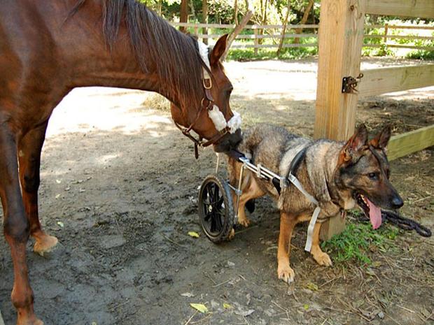 horsemeetsdogonwheels.jpg