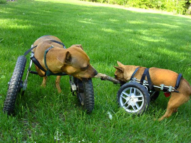 dogfriendsonwheels.jpg