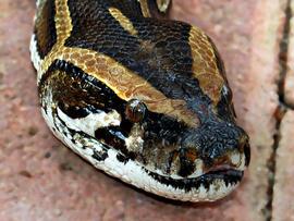 python, stock