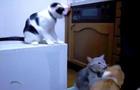 Cat_Trolling.jpg