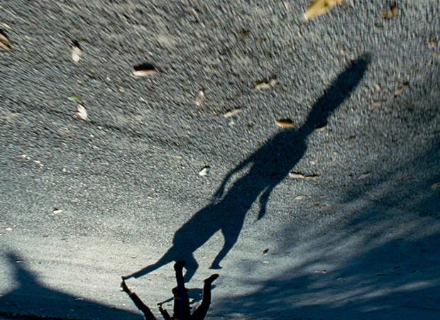 treeoflife_shadows.jpg