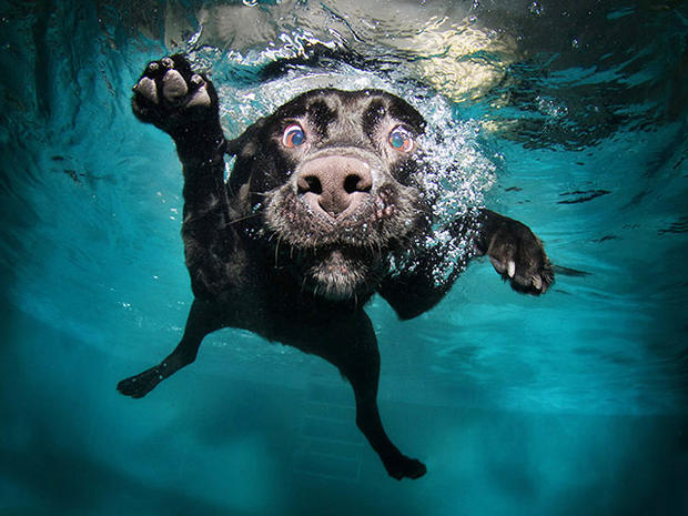 underwater dogs photos go viral and become a book photo 13