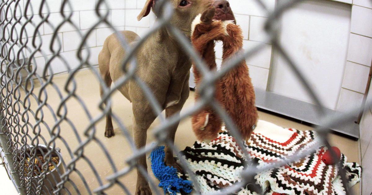 Judge gives Tenn  dog on death row a reprieve - CBS News