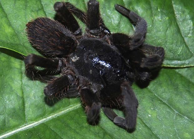 spiders_tAP120530153234.jpg