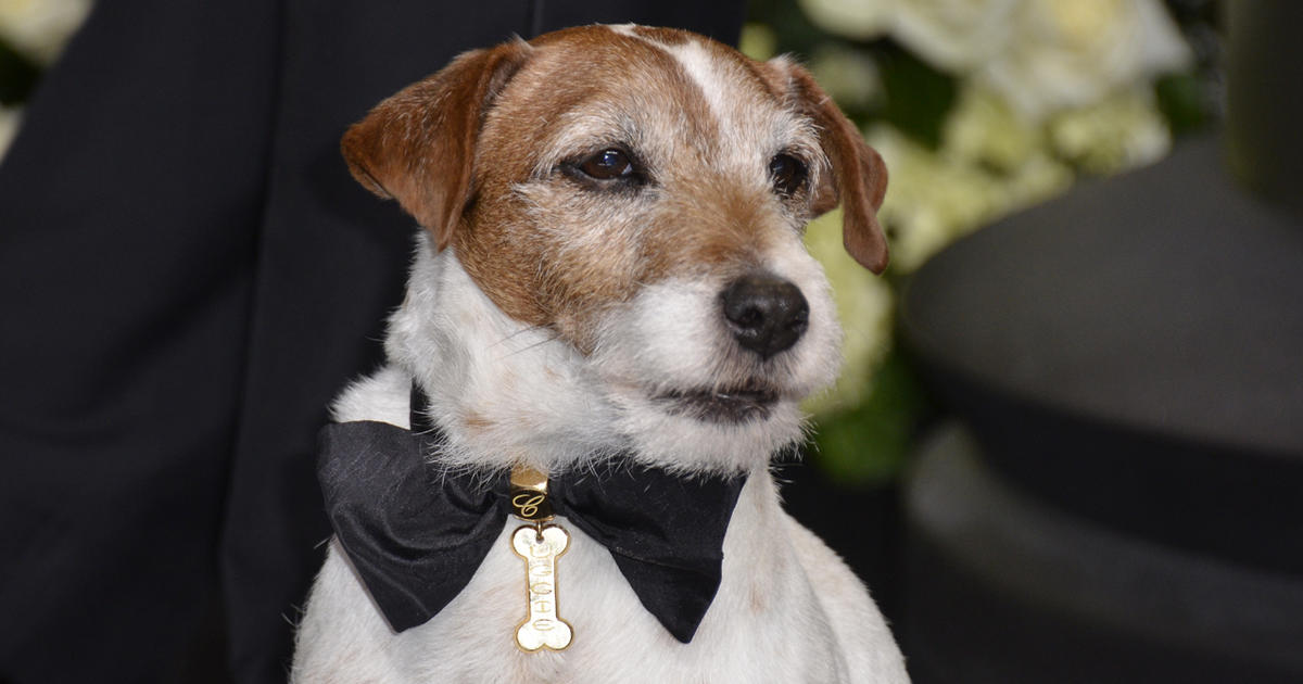 """Petey from """"Little Rascals"""" - Famous dogs RIP - Pictures ... 
