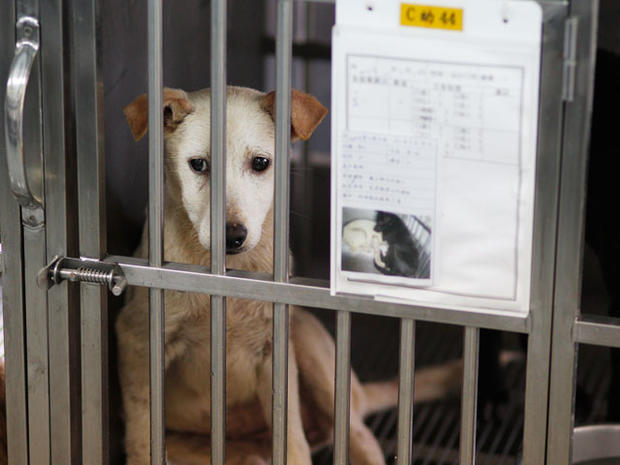 Shelter dogs before their final moments