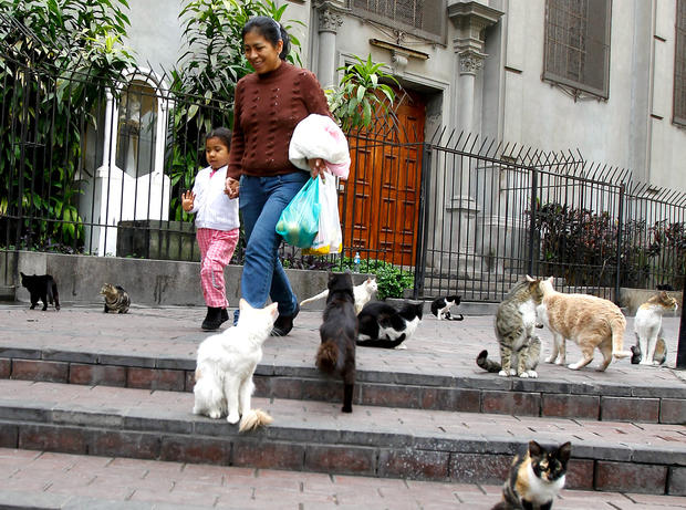 Pedestrians walk past cats gathered in the central park of Lima's upscale seaside Miraflores district, in Peru, Wednesday, Aug. 2, 2012.