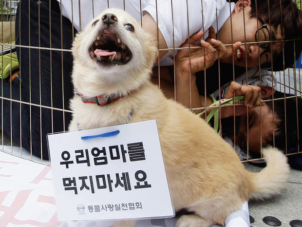 Anti-dog meat protest held in South Korea