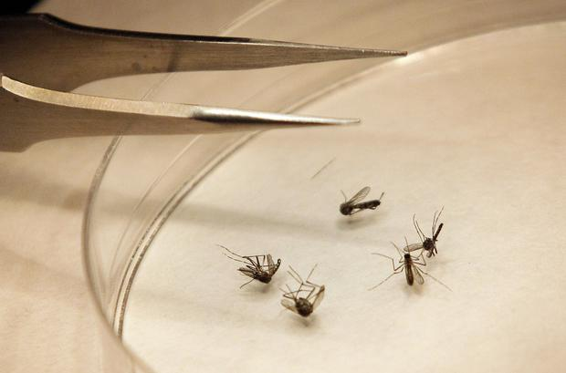 West Nile Virus outbreak 2012