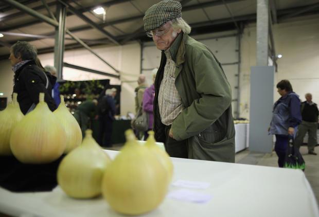 Giant vegetables from UK festival