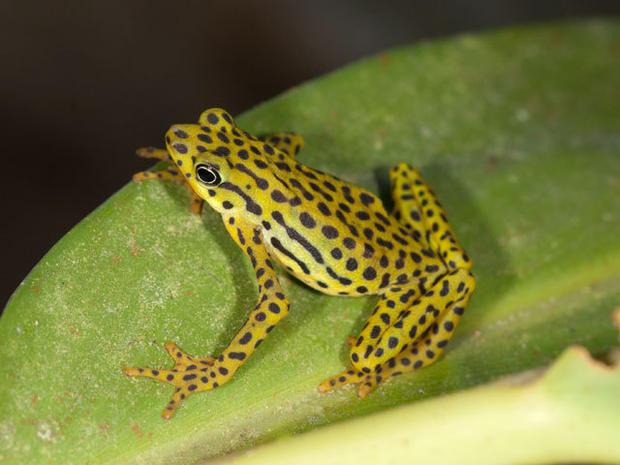 Species closest to extinction