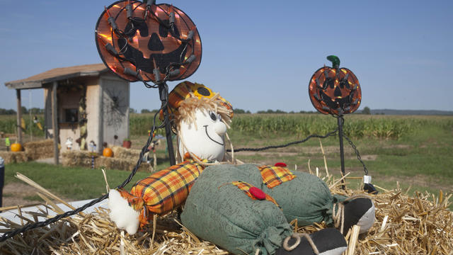 A fall seasonal display sits on a hay bale at the Schaefers family corn maze near Mayflower, Ark., in this photo taken Tuesday, Oct. 2, 2012.