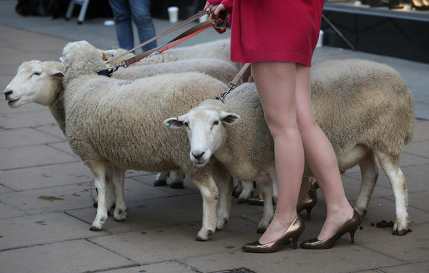 Models with sheep?