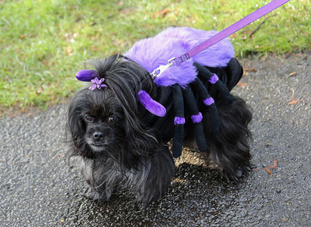 Spooky pets in Halloween costumes